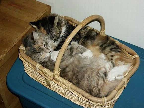 выкройка лежанки для кошки