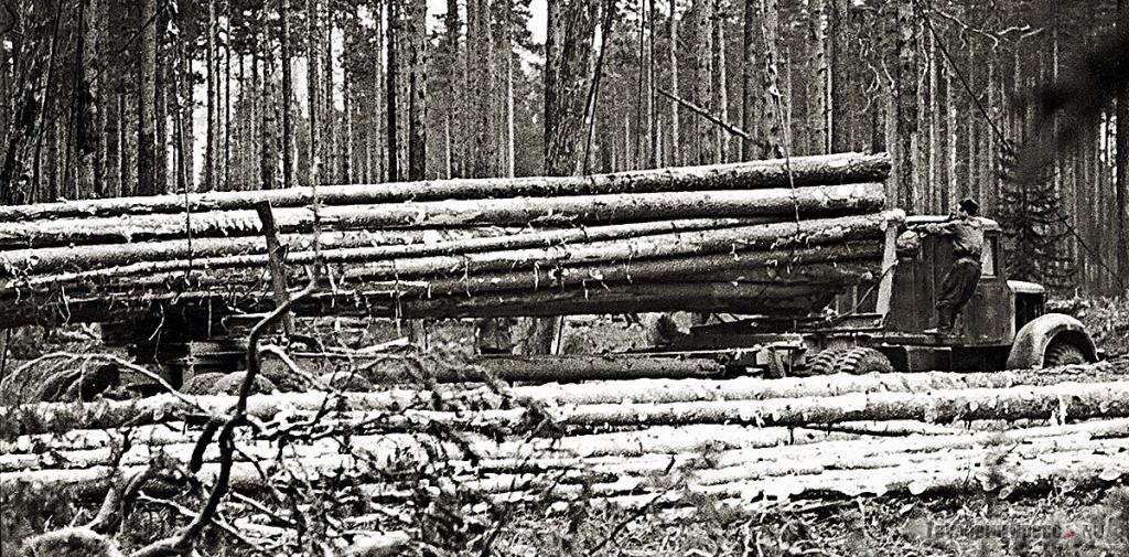 Лесовоз МАЗ-501
