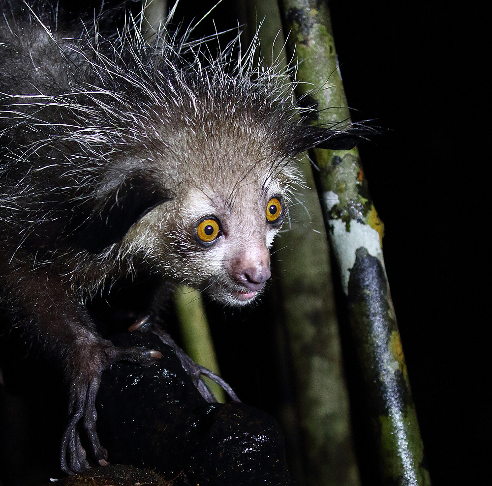Самые ужасные животные в мире: фото и описание, где обитают