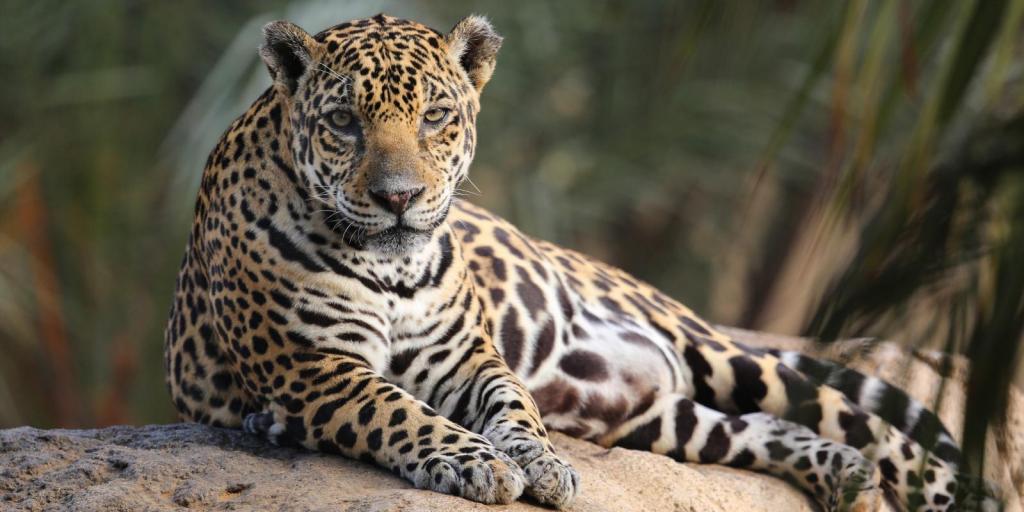 Самые опасные животные Африки. Большая африканская пятерка