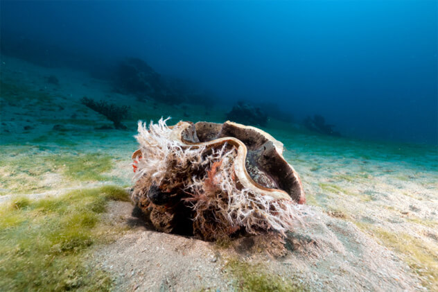 Животные Марианской впадины: фото и описание