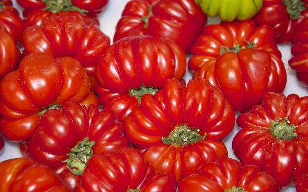 томаты рим описание