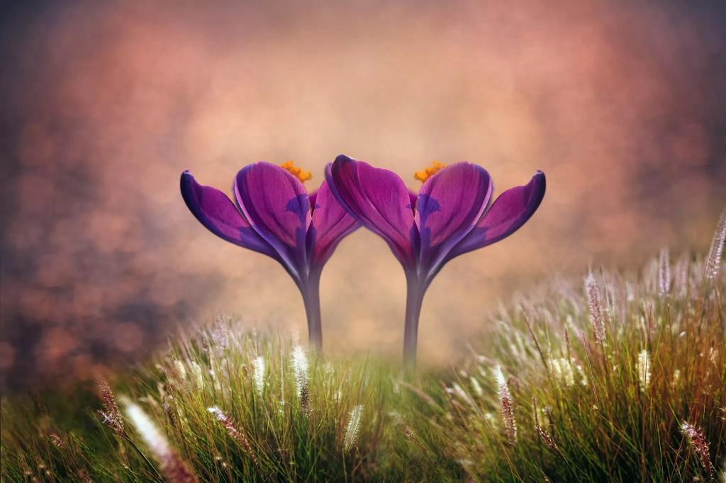 Сказочные цветы.