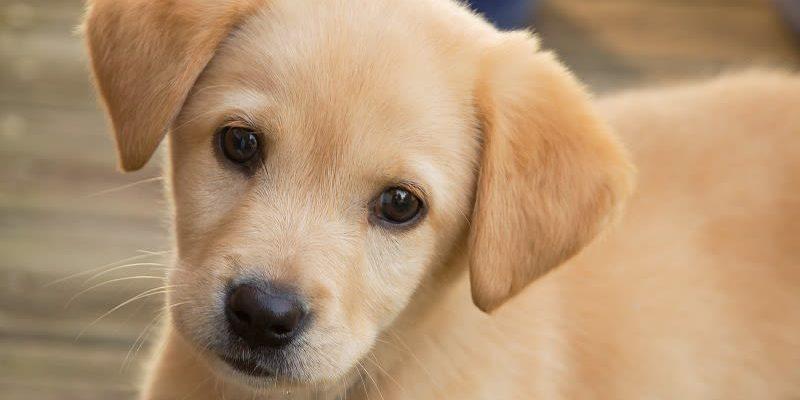 Хорошенький щенок