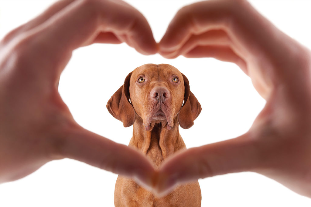 Собака и сердце из рук