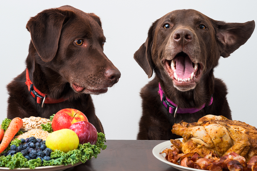 Собаки и продукты
