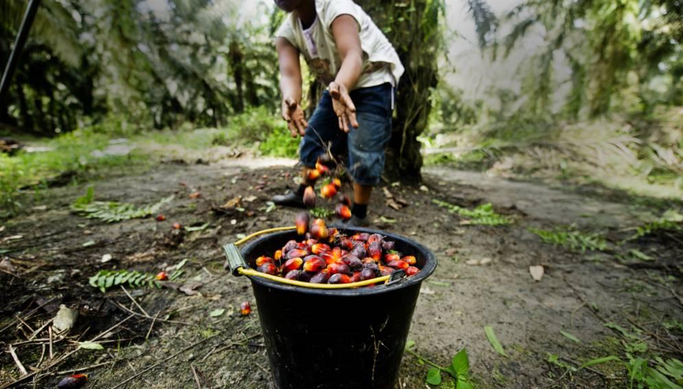 пальмовое масло вред для организма человека