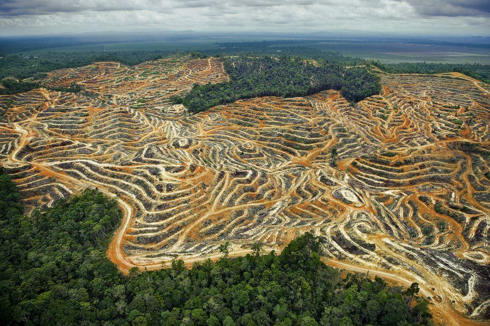 вред пальмового масла для здоровья человека кратко