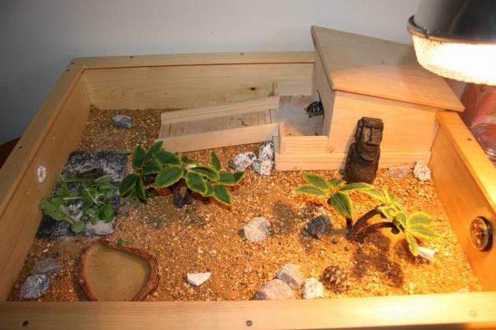 средиземноморская черепаха в домашних условиях