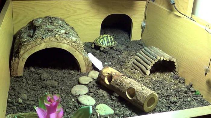 средиземноморская черепаха описание для детей
