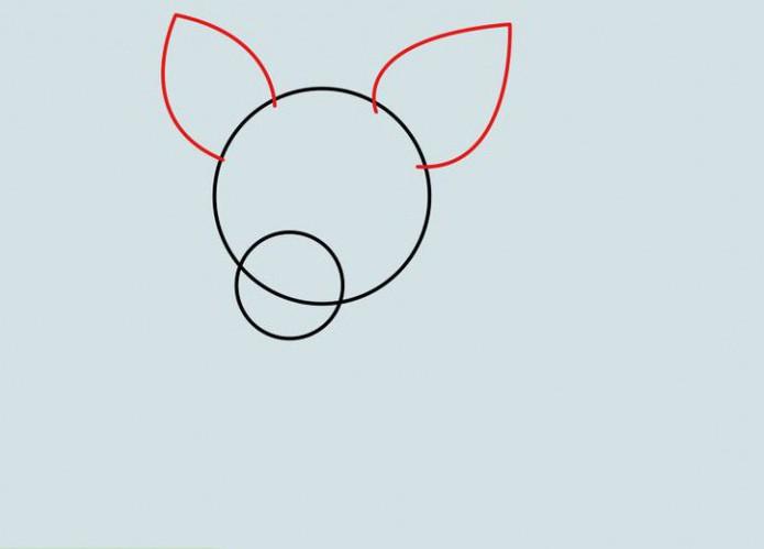 как нарисовать собаку чихуахуа поэтапно