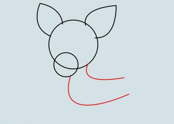 как нарисовать собаку чихуахуа карандашом
