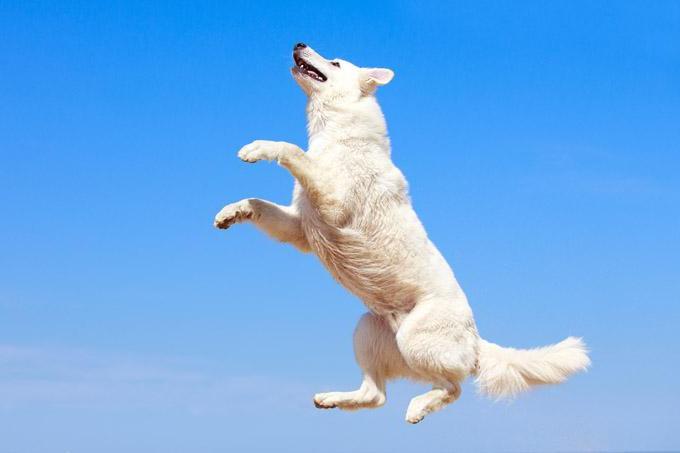 как отучить собаку прыгать на хозяина на улице