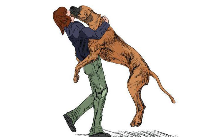 как отучить щенка прыгать на хозяина