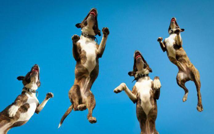 как отучить собаку прыгать на людей