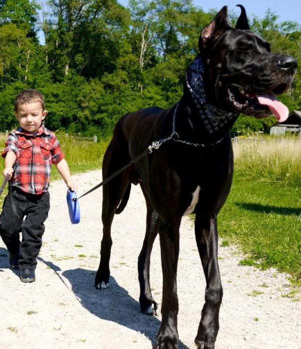 какие породы собак считаются самыми большими