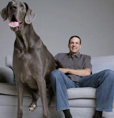 Самая высокая собака в мире.