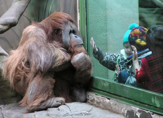 московский зоопарк цена билета
