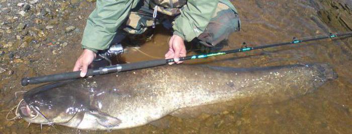 запрет рыбалки в перми