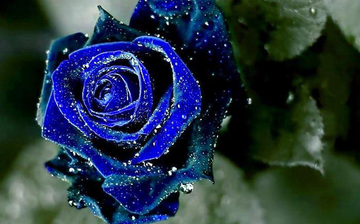 Фото цветы для водолея женщины