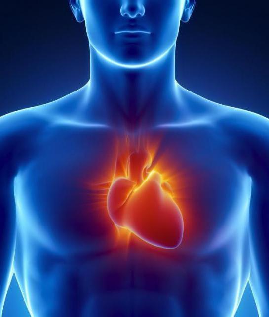 эхокардиография сердца расшифровка