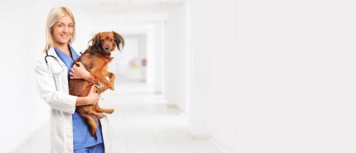 круглосуточные ветеринарные клиники в Пскове
