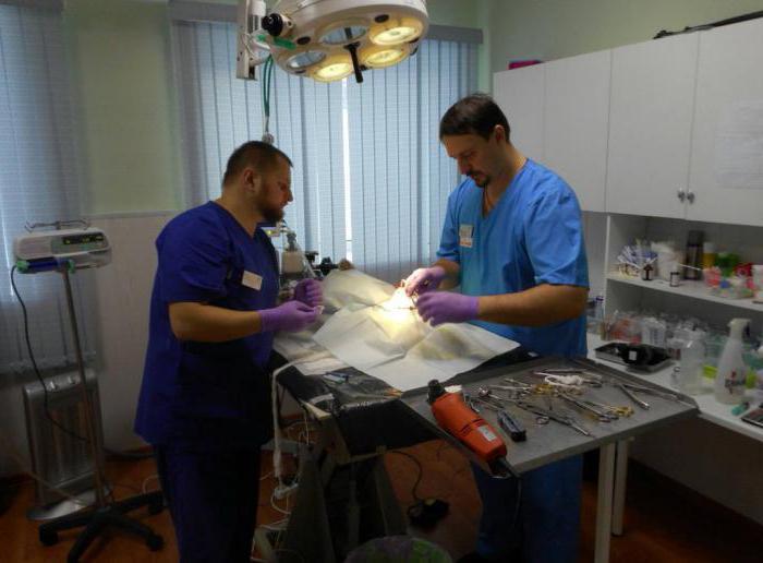 ветеринарная клиника Псков отзывы