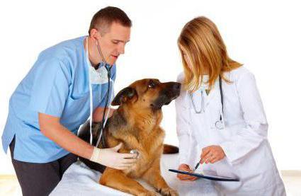 лекарство от простатита у собак