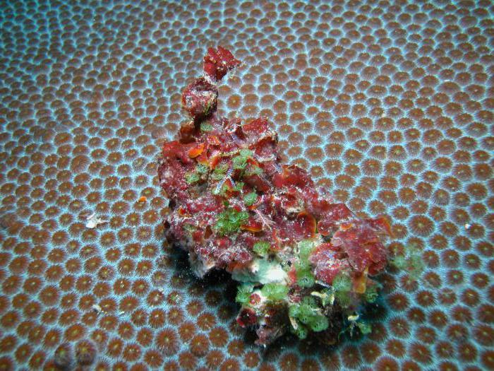 альгология наука о водорослях
