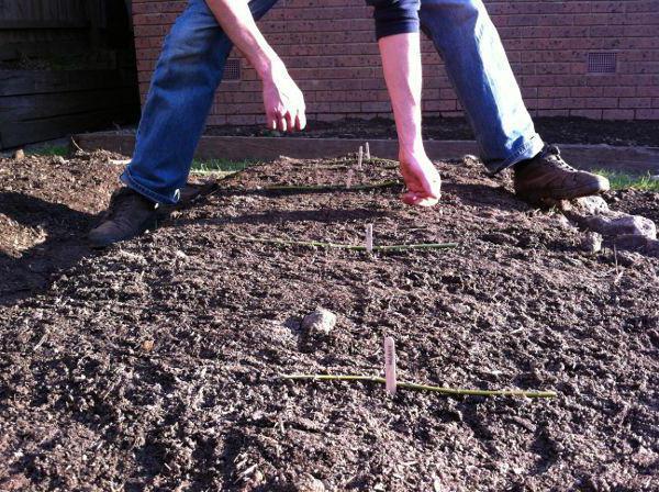 Как сажать морковь в открытый грунт семенами 77