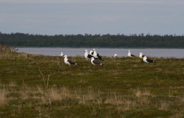 залив Белого моря