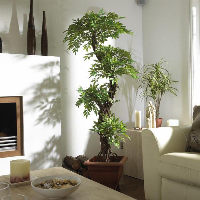 искусственные декоративные деревья для дома