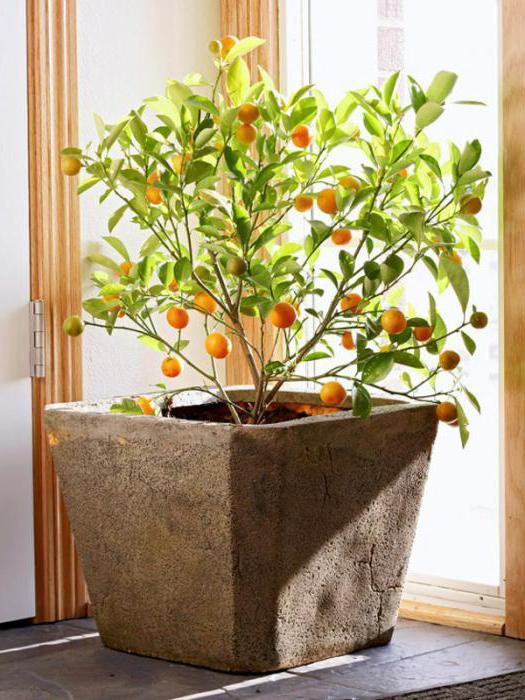 фото декоративных деревьев для дома