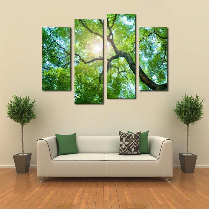 живые декоративные деревья для дома