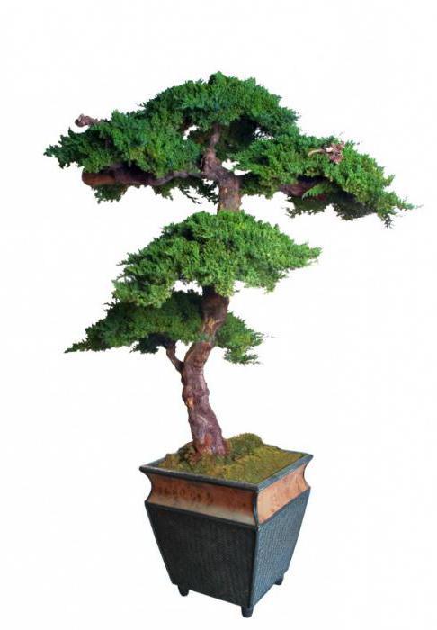 искусственные декоративные деревья для дома в горшках