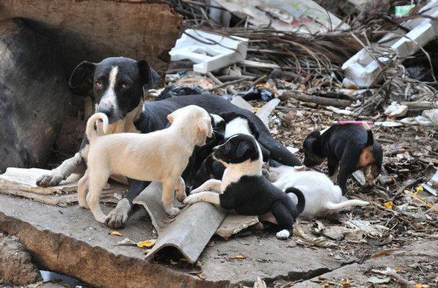 термобелья бездомные собаки куда обращаться казань игры