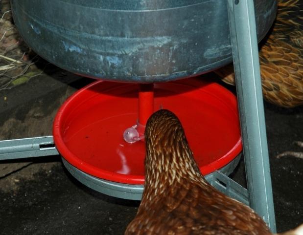 Как изготовить поилку для кур