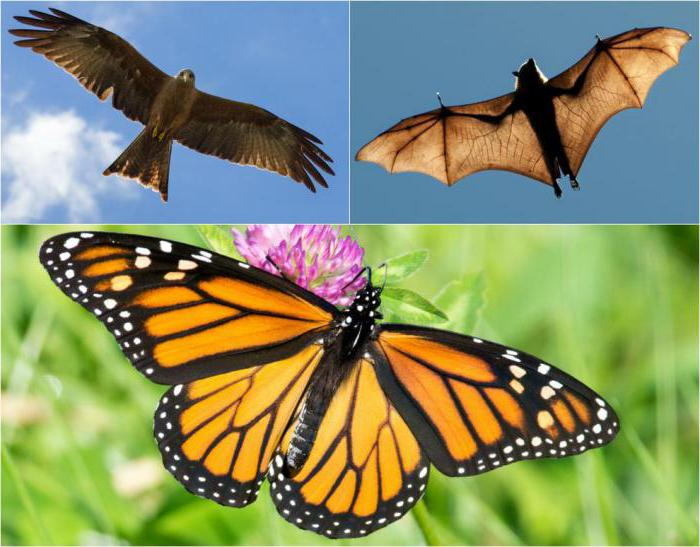 параллелизм в биологии характеристика и примеры