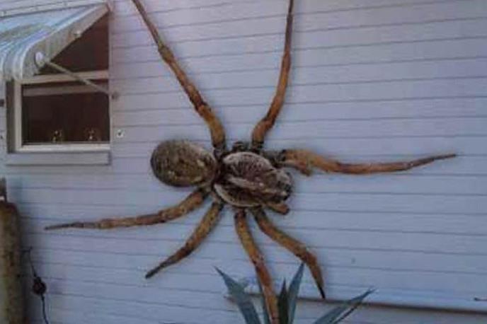 пауки людоеды в эльбрусском районе
