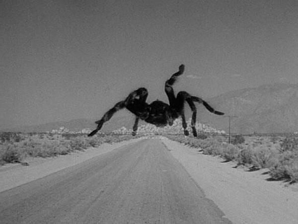 пауки людоеды на кавказе
