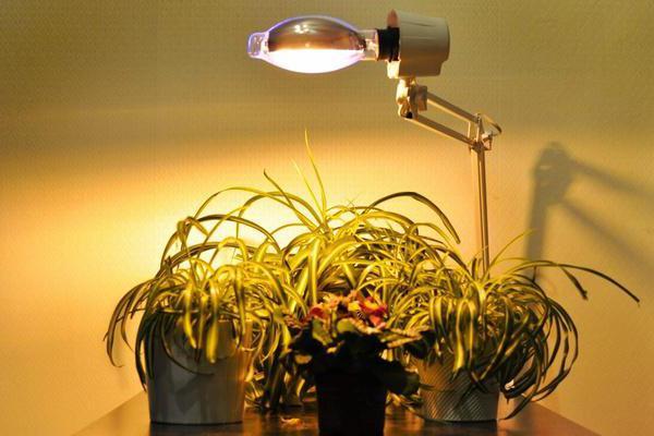 Лампа Рефлакс для растений