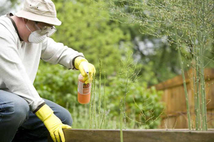 борьба с сорняками на огороде по современному молочай