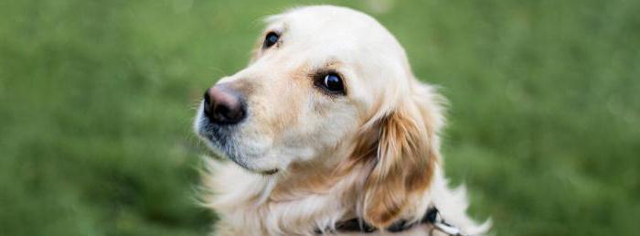 питомники собак в воронеже