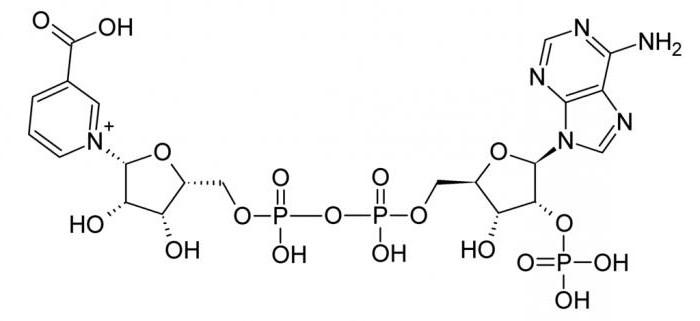 роль пируватдегидрогеназного комплекса