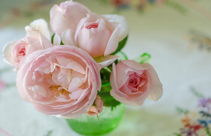 как размножить розу от куста