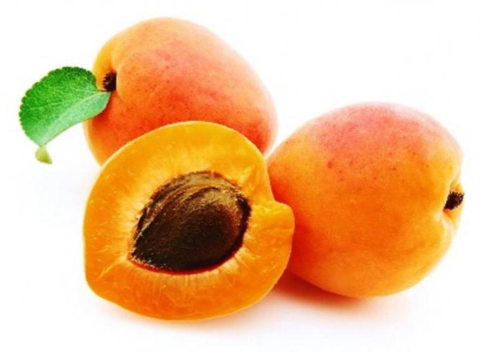 срок созревания армянских абрикосов