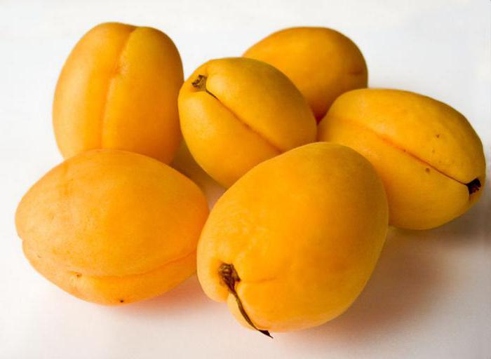сорт абрикосов шалах