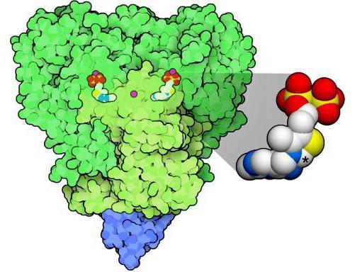 строение пируватдегидрогеназного комплекса
