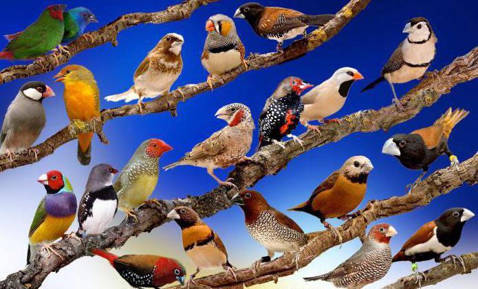 результатом эволюции является естественный отбор