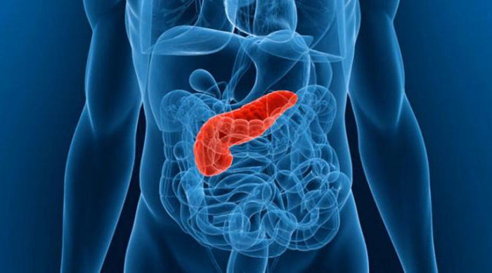 протоки поджелудочной железы открываются в двенадцатиперстную кишку